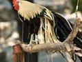 「卵かけご飯や目玉焼きが貴族料理に……!?」史上最悪の鳥インフルエンザが襲来!