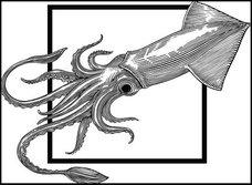 「イカが賢すぎてディープラーニングしてる」北海道スルメイカ不漁の原因にまさかの第三仮説浮上!