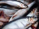 魚臭症「TMAU」 ― 死んだ魚の臭いがする奇病で社会から拒絶された美女・カミーユの場合