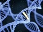 「遺伝子組換え食品」ならぬ「ゲノム編集食品」がもうすぐ日本の食卓に! 理学博士が緊急警告「リスク未知数」