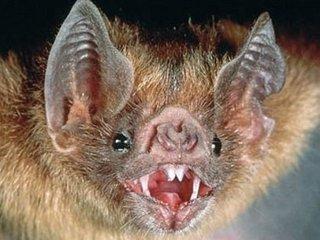 """ブラジルで""""人喰いコウモリ""""が進化・急増中! 続々と人間の血を求める異常事態、狂犬病懸念も"""