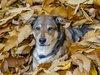 犬はレゲエ好きであることが新たな調査で発覚!