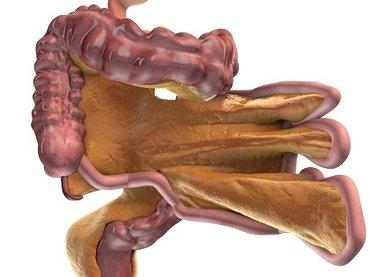 【取材】こないだ西洋医学で発見された人体の新臓器「腸間膜」、東洋医学は前から知っていたことが判明!