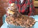 ビッグフットの手足と臓器が公開され、ギネス申請へ!? 父の遺言も「絶対に食べるな。毒だ、死ぬぞ」