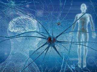 【脳神経学の大発見!「iSC細胞(虚血誘導性多能性幹細胞)」の移植で「死んだ神経細胞」が再生した!