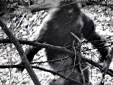 米大手放送局「ビッグフット出現」大々的に報道! 残された巨大足跡を10キロ以上追跡した猟師が証言 =ノースダコタ