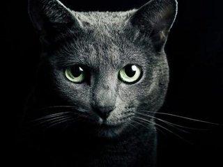 【ネコは宇宙人が送り込んだ人類を監視するためのスパイだった! 専門家「ゴロゴロすら科学的に解明できぬ」