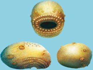 """人類の祖先は""""口がアナル""""の激グロモンスターだった! 5億4千万年前の化石で判明(最新研究)"""
