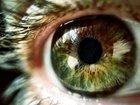 全人類共通の「集合的無意識」は確実に存在する! 「ブーバ/キキ効果」実験で判明(最新研究)