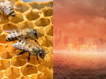 【ガチ】絶滅しかけのミツバチを今救わないと、人類は4年で滅ぶ!(徹底解説)