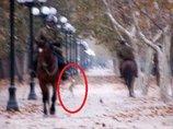 【衝撃】ヒョコヒョコ歩く「完全なる宇宙人」が国有林で激写される! 無言貫く政府に深まる疑惑=チリ