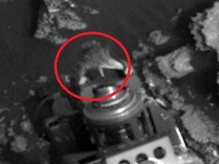 """【火星探査機にしがみつく""""生きたトカゲ""""が激写される! 研究者「100%地球外生命体」"""