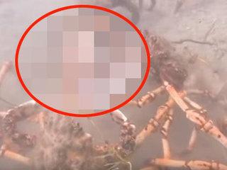 【衝撃動画】カニの大群がタコを集団リンチ、引き裂きの刑に! 理学博士「非常に珍しい残虐光景」