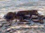 火星に「エイリアンの死体」が放置されていた! NASA公式画像で判明、研究者「火星に生命が存在した動かぬ証拠」