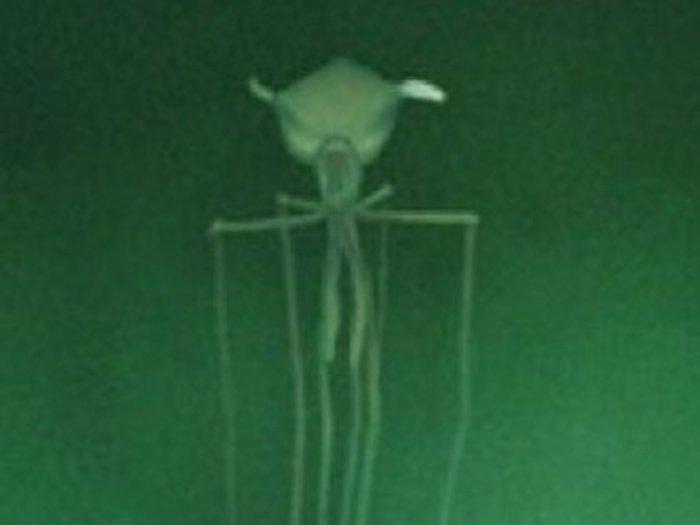 【衝撃動画】深海で「エイリアン生命体」が発見される! 巨大な頭部、釣りあがった目…謎すぎる姿