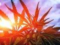 【警告】海外で大麻を吸った日本人の「見せしめ逮捕」がもうすぐ始まるぞ! 医療用大麻処方でも刑務所行き!