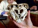 """奇怪すぎる「ロドピの頭蓋骨」の謎! 大学教授による検証も""""正体不明""""、 古代文明の遺伝子操作か!?=ブルガリア"""