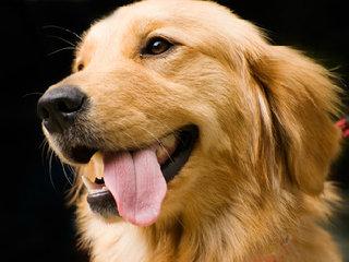 【全国初! がん探知犬によるがん検診~試験管に入った尿を嗅ぎ分け判定