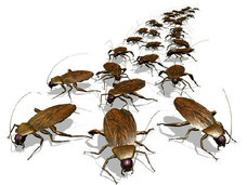 【家から「ゴキブリ」を完璧に追い出す! 自然に優しい「ゴキブリゼロ」方法とは?