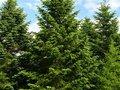 「木々もソーシャルネットワークを持っている」ことが判明! 感情も記憶もある、ドイツの森林警備隊員が断言!