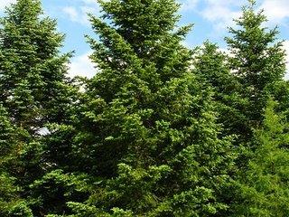 【「木々もソーシャルネットワークを持っている」ことが判明! 感情も記憶もある、ドイツの森林警備隊員が断言!