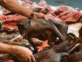 """【社会問題】苦悶の表情で焼かれた""""猿肉""""を食べる! 絶滅危惧種が並ぶミハナサ族のフードマーケットとは?=インドネシア"""