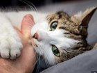 """ネコは家畜を""""演じて""""人間を利用している!? ネコがいかに世界を制覇したか古代DNAで判明、科学者「彼らは最初から完璧だった」"""