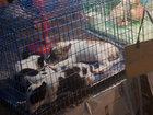 """【閲覧注意】レトリバーらしき犬を生きたまま""""釜茹で""""にする超おぞましい光景!「キャン…キャン…」中国農村、犬食文化のリアル"""