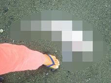 【緊急レポート】幻の深海魚「ゴーストシャーク」が湘南の海岸に出現か!? 8月までに神奈川で大地震の可能性!!