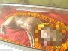 """インドで完璧なる""""人面牛""""誕生、ヒンドゥー教のヴィシュヌ神の化身か!? 祝福を求めて信者殺到、寺院建立も決定する大フィーバー!"""