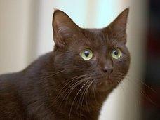 """「ネコがあなたを殺そうとしている8つのサイン」! カーテンの後ろに潜んでいる時は殺害準備、超獰猛な""""キラー・キャット""""も!"""