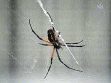 世界で続出する害虫の人体侵入! インド人女性の耳から生きたクモが摘出される