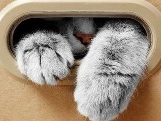 【【量子論】「シュレーディンガーの猫」、箱を開けなければ不老不死だった! 「量子ゼノ効果」の謎すぎる実験結果が証明!