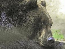 交通標識を守る親子熊の姿がネットで話題に!