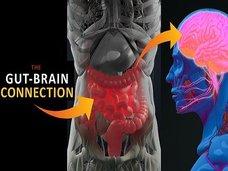 【【衝撃】人間の感情は腸内微生物(腹の虫)に支配されていたことが判明! 「腸=第2の脳」は本当だった!(最新研究)