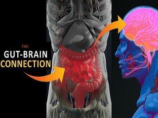 【衝撃】人間の感情は腸内微生物(腹の虫)に支配されていたことが判明! 「腸=第2の脳」は本当だった!(最新研究)