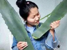 実は有毒植物だった! アロエの大食いチャレンジを生配信していた女性が中毒死寸前に