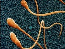 【【警告】22年後に世界から精子が尽きることが判明、人類滅亡へ! 研究者「爆速で精子が減少中」(最新研究)