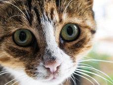 """【閲覧注意】子猫をボールのように投げ、足蹴にして惨殺する姉妹 ― ロシア人も激怒した""""超胸クソ""""猫虐待映像"""