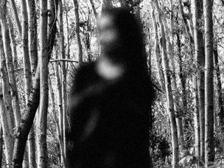 子どもたちが相次いで失踪する謎の森 ― アンジェルス国有林の3つの消失事件=アメリカ