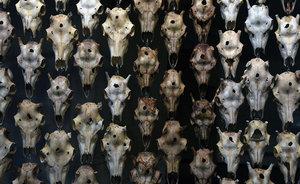 ドイツ人たちは縄文タトゥーをどう見たか? カウンター視点の国際芸術祭「ドクメンタ14」&ドイツで開催された『縄文族 JOMON TRIBE』展の顛末