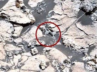 """【火星で次々に発見された「古代エイリアンの骨」、遂にNASAが公式見解発表! 明らかに""""骨""""にしか見えない物体の説明に注目集まる!"""