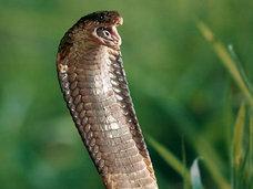 5歳の少年がトイレでニシキヘビを発見!