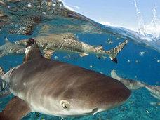 水上コテージの下にサメが出現!?