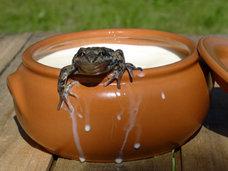 【ショック】牛乳にカエル投入、トウモロコシの芯で肛門を…!? 科学技術の発達前、人間が行っていた奇妙すぎる行動5選