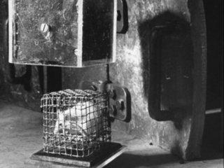 """【閲覧注意】まるでゾンビかミュータント… 放射線を使った恐怖の動物実験写真5! """"被爆ネズミ""""の変わり果てた姿に驚愕"""