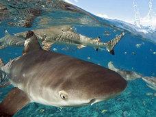 海水浴客がプールに迷い込んだサメを救出