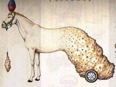 """パラレルワールドの百科事典『コデックス・セラフィニアヌス』― 奇妙な植物、SEX、医療…異世界の話を""""未知の言語""""で綴った本の驚愕内容とは?"""