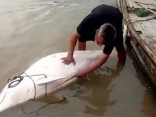 中国漁民が国家保護動物のシロイルカを解体販売! 「パンダ捕殺と同等」の蛮行に、死刑の可能性も……