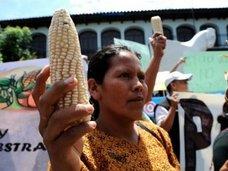 メキシコ先住民がモンサント社に勝訴、EUも遺伝子組換え作物排除へ! 3代目当主の死去でロックフェラー家の人類支配に終焉の兆しか!?